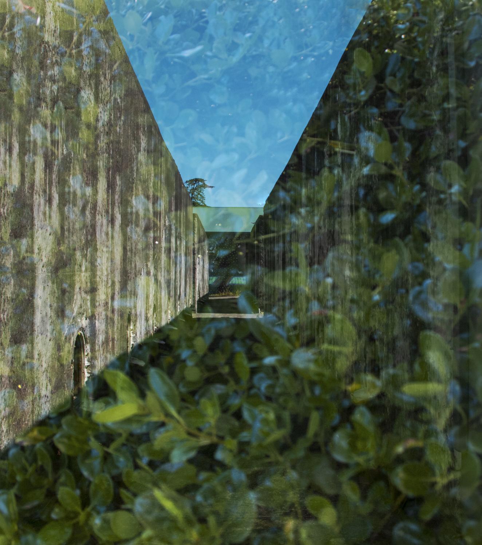 Leaf Cover by Cheryl Harvey