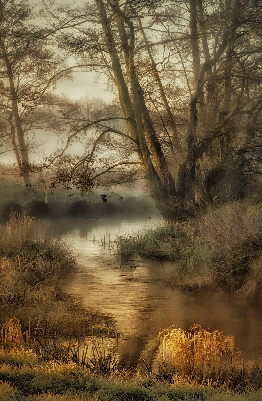 River Rib On A Misty Morning By John Mcdowall