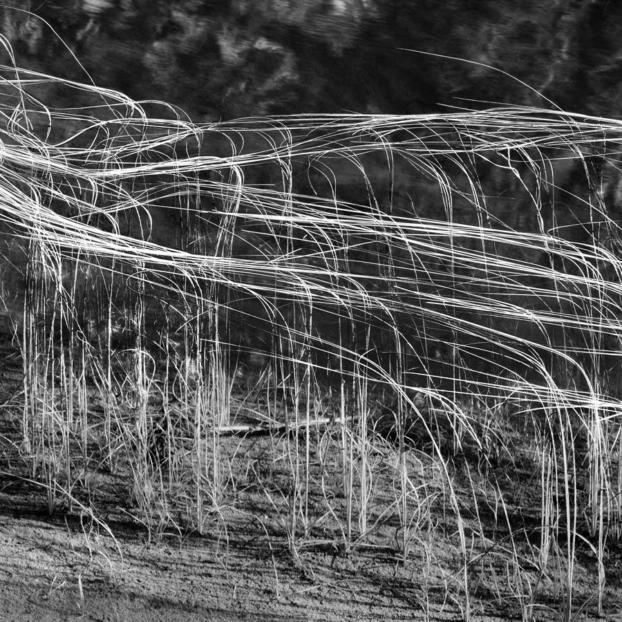 Reeds#4 By Carles Mitja ASIS FRPS (Spain)