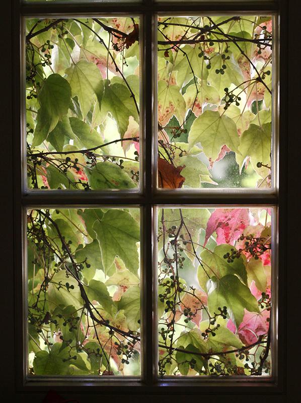 Floral Curtain By Grahame Soden ARPS Sweden