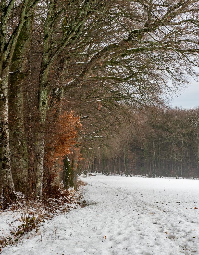 'Snowy Walk' Jill Taylor LRPS
