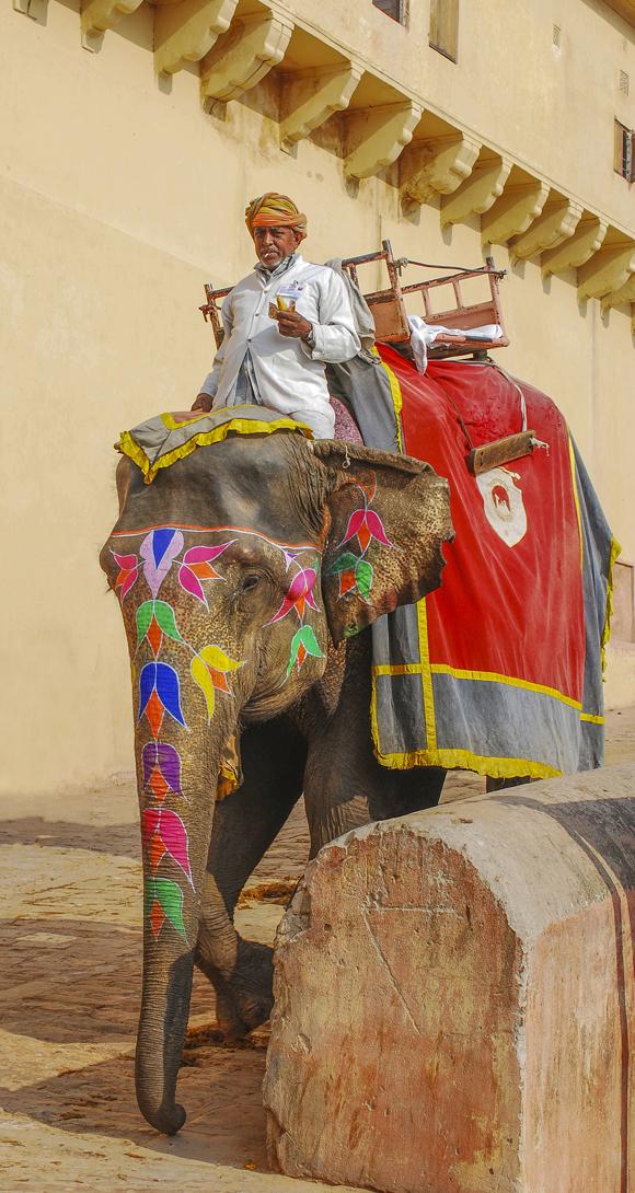 The Elephant Handler Amber Fort Jaipur
