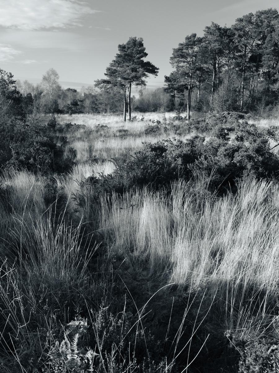 Mutters Moor Steve Jupp