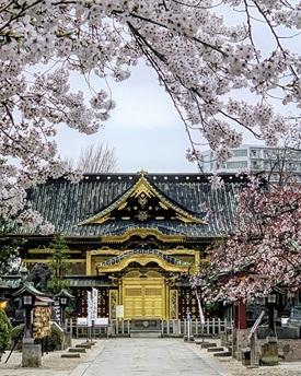 Spring In Tokyojpg